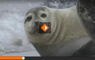 waddenzee zeehond vab