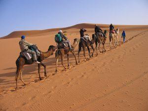 kamelen vab